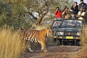 ranthambore-national-park-safari