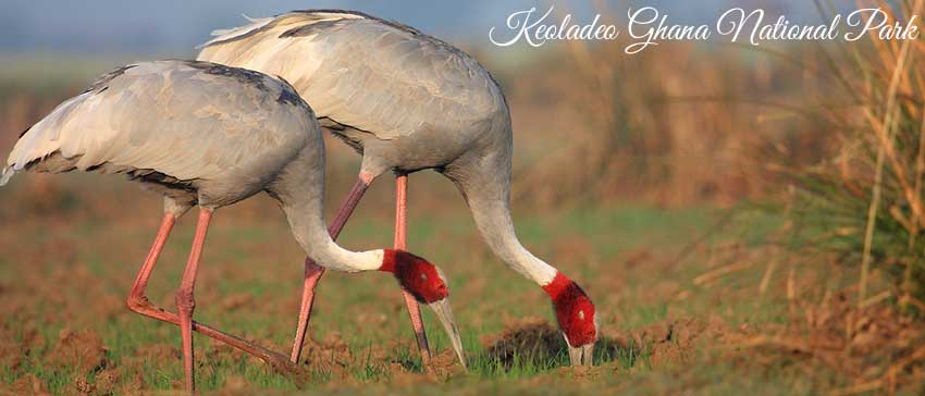 keoladeo-ghana-national-park