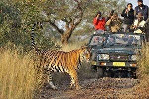 ranthambore-national-park-safari