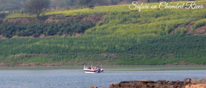 safari on chambal river