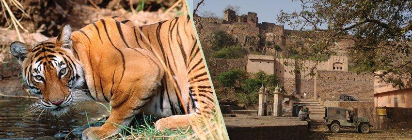 Ranthambhor National Park Safari