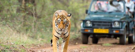 Golden Triangle With Wildlife Safari
